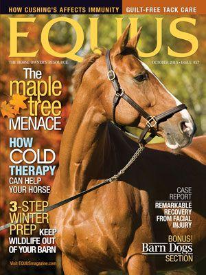 EQUUS magazine cover shot of brown horse.